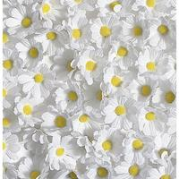 Scatter daisies
