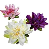 Lotus flowers set
