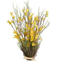 Forsythia bundle
