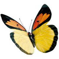"Butterfly ""Neotropis"""