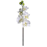Orchid branch