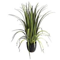 Reed grass in pot