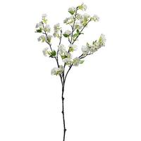 Cherry blossoms branch, standing