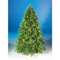 Spruce fir tree with light
