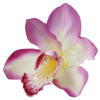 orchid blossom pink