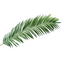Giant palm frond