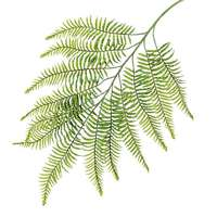 Fern branch XL