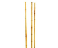 Bamboo canes set